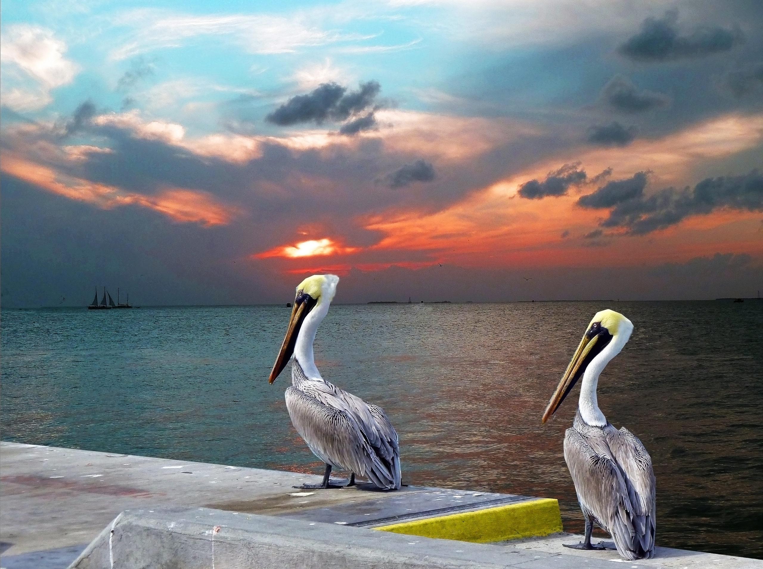 P1040605 Key West tramonto ok