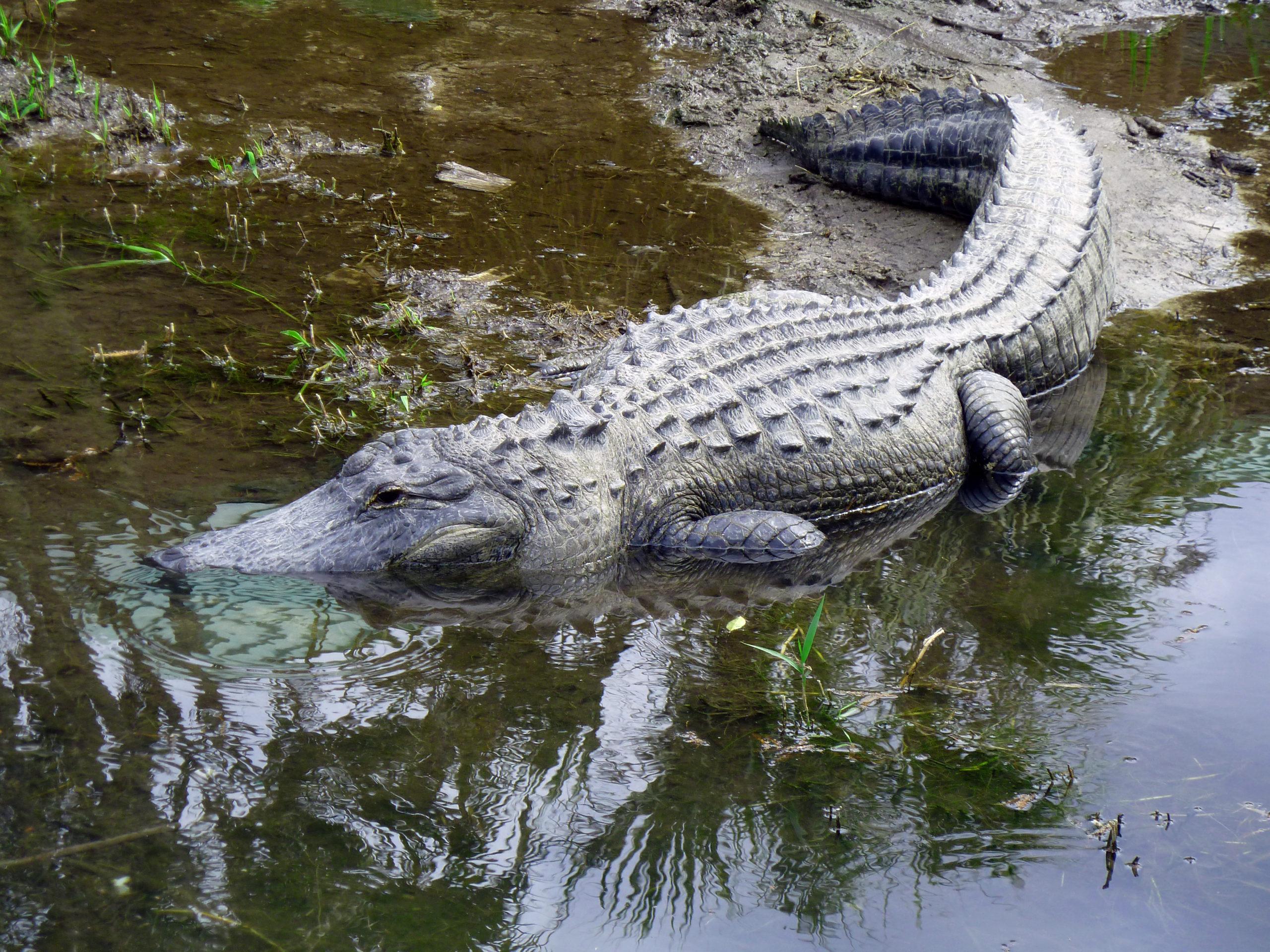 P1040684 Everglades