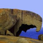 img013 Kanguroo island ok