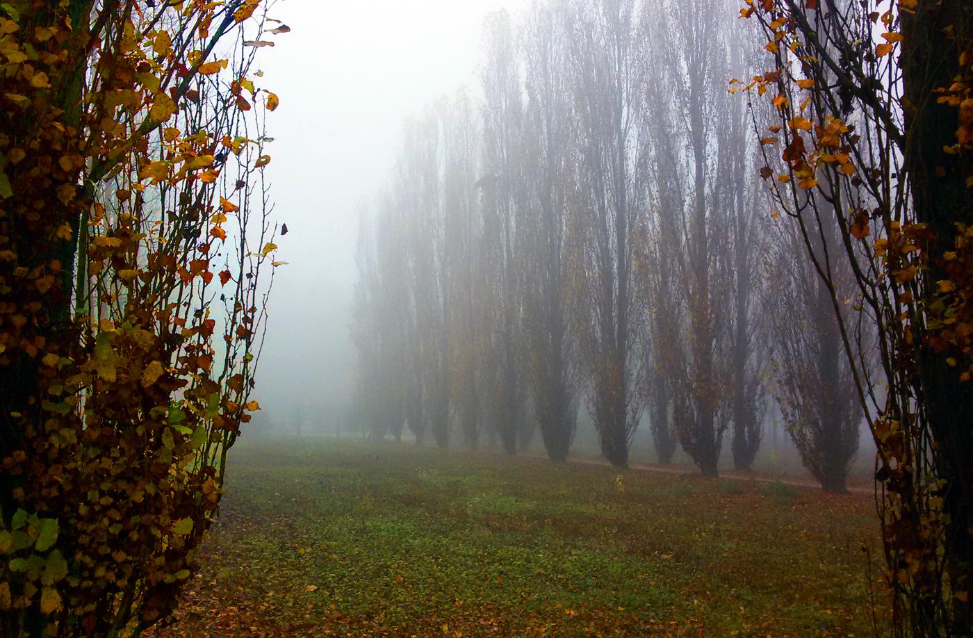 a nebbia 2 piccola