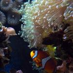 P1230252 acquario piccola